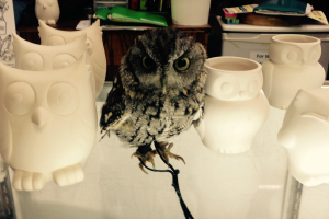 Paint Your Own Pottery Owl Night